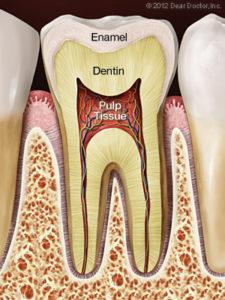 Bliley Dental Endodontics