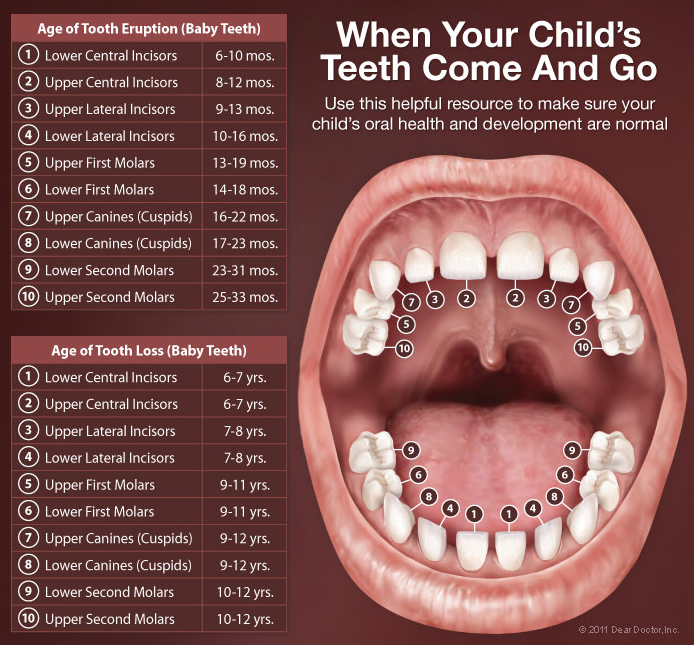 Bliley Dental Teething